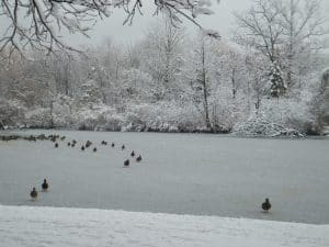 Dufferin Islands In Winter