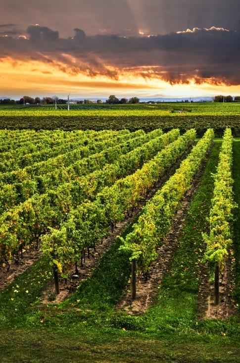 Niagara Wine Vacation: Niagara Wine Tour Packages & More