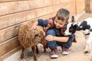 Happy Rolphs Animal Farm
