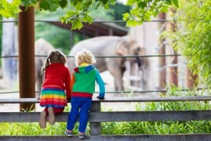 Children watching elephants